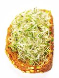 Alfalfa sprouts sandwich Stock Photography