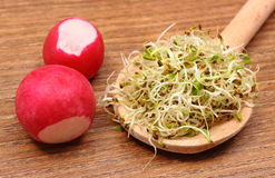 Alfalfa sprouts on scoop and radish, wooden background Stock Photo