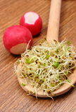 Alfalfa sprouts on scoop and radish, wooden background Stock Photos