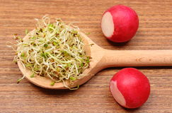 Alfalfa sprouts on scoop and radish, wooden background Royalty Free Stock Photography