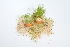 Alfalfa Sprouts and Spring Easter Egg Stock Photo