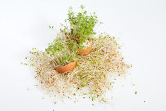 Alfalfa Sprouts and Spring Easter Egg Stock Photos
