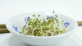 Alfalfa sprouts stock video footage