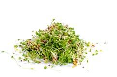 Alfalfa sprouts Royalty Free Stock Photos