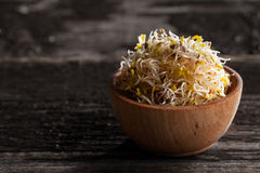 Alfalfa Sprouts in a Wooden bowl. Close-up of Alfalfa Sprouts in a Wooden bowl Royalty Free Stock Photos