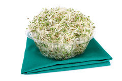 Alfalfa. In transparent container on white background Royalty Free Stock Photography