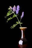 Alfalfa in Vase Stock Photo