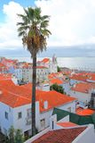 Alfama neighborhood viewed from Santa Luzia viewpoint miradouro with a palm tree in the foreground and Santa Estevao Church and Stock Photography