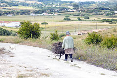 ALFAMBRAS, PORTUGAL - 25 DE MAIO DE 2014: Recolhendo a lenha para o makin Foto de Stock Royalty Free