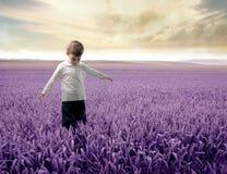 Alfazema Imagens de Stock Royalty Free