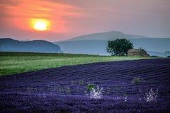 A alfazema coloca no por do sol perto da vila de Valensole, Provence, França fotos de stock royalty free