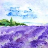A alfazema da aquarela coloca a paisagem de França Provence da natureza Imagem de Stock Royalty Free