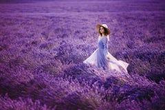 Alfazema das flores, França, Provence imagem de stock royalty free