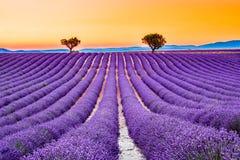 Alfazema de Valensole em Provence, Fran?a imagem de stock