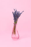 Alfazema do ramalhete em um vaso em um estilo mínimo do fundo cor-de-rosa Imagens de Stock Royalty Free
