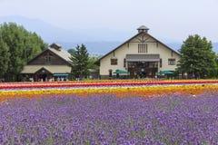 A alfazema e os campos de flor coloridos de Tomita cultivam, Furano, Hokk Imagem de Stock Royalty Free