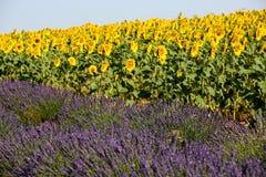 Alfazema em Provence imagem de stock royalty free