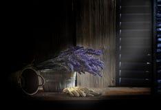 Alfazema fresca na sala escura Fotos de Stock Royalty Free