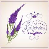 Alfazema Grinalda das ervas em um estilo retro com uma curva ilustração stock