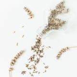 Alfazema seca isolada no fundo branco Ainda vida 1 Vista superior Foto de Stock Royalty Free