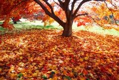 Alfombra colorida de hojas caidas Imagen de archivo libre de regalías