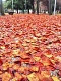 Alfombra colorida de las hojas de otoño Foto de archivo libre de regalías