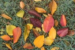 Alfombra colorida del otoño Foto de archivo libre de regalías