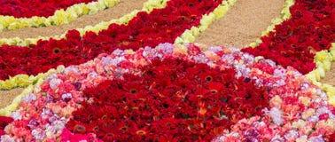Alfombra Corpus Christi de la flor Fotografía de archivo libre de regalías