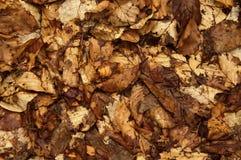 Alfombra de hojas secas Imagen de archivo libre de regalías