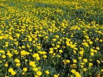 Alfombra de la flor fotografía de archivo