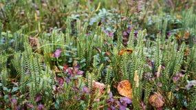 Alfombra de la hierba Imagenes de archivo