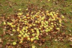 Alfombra de manzanas Foto de archivo libre de regalías