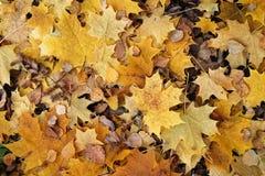 Alfombra del otoño Foto de archivo