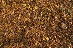 Alfombra del otoño Imagen de archivo libre de regalías