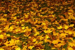 Alfombra del otoño Imagenes de archivo