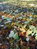 Alfombra del oto?o de hojas amarillas Fotografía de archivo libre de regalías