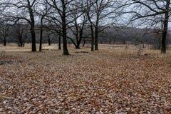 Alfombra densa de las hojas caidas del roble Foto de archivo