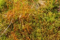 Alfombra natural del musgo Imagen de archivo