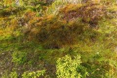 Alfombra natural del musgo Foto de archivo libre de regalías