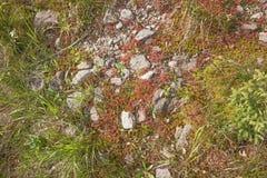 Alfombra natural del musgo con las piedras Imágenes de archivo libres de regalías