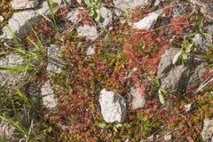 Alfombra natural del musgo con las piedras Fotos de archivo