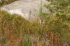 Alfombra natural del musgo con las piedras Imagen de archivo