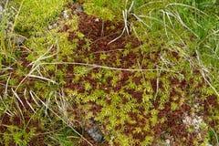 Alfombra natural del musgo verde Fotos de archivo libres de regalías