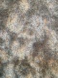 Alfombra rayada de las lanas Fotos de archivo