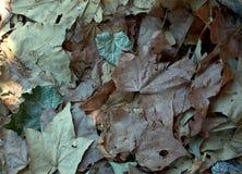 Alfombra secada de las hojas Imagen de archivo libre de regalías
