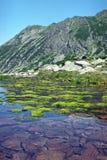 Alfombra suave del musgo en el agua Foto de archivo libre de regalías