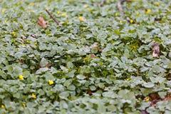 Alfombra verde en el bosque Imagen de archivo
