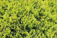Alfombra verde fresca del musgo del bosque como fondo fotos de archivo