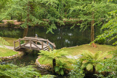 Beautiful green forest and bridge. The Alfred Nicholas Memorial Gardens is a great venue for all nature lovers. Located in Sherbrooke, these gardens are home to Stock Image