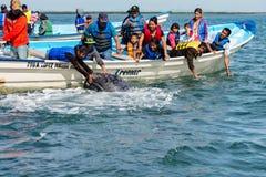 ALFREDO LOPEZ MATEOS - MEXICO - FEBRUARI, 5 2015 - grijze walvis die een boot naderen Stock Foto's